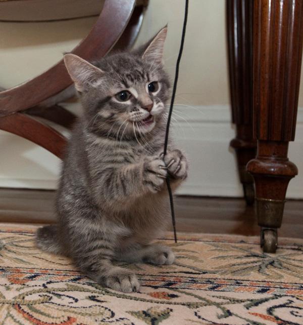 Canada: Prime Minister Stephen Harper likes posting cat ...