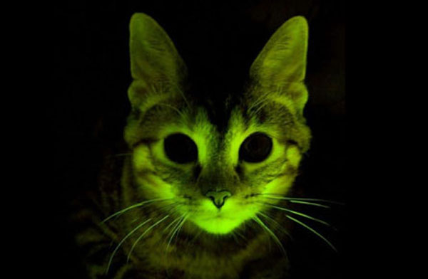 7 Genetically Modified Animals That Now Glow in the Dark ...