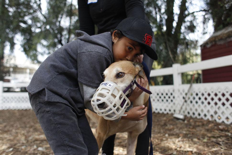 Handsome Hounds Dog Grooming Washington