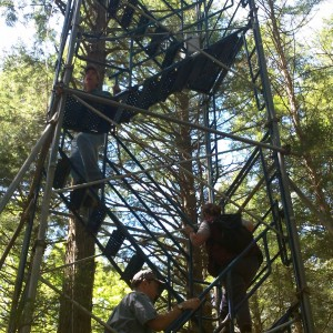 Climbing A Rickety Stair To The Top Of The Forest Boing