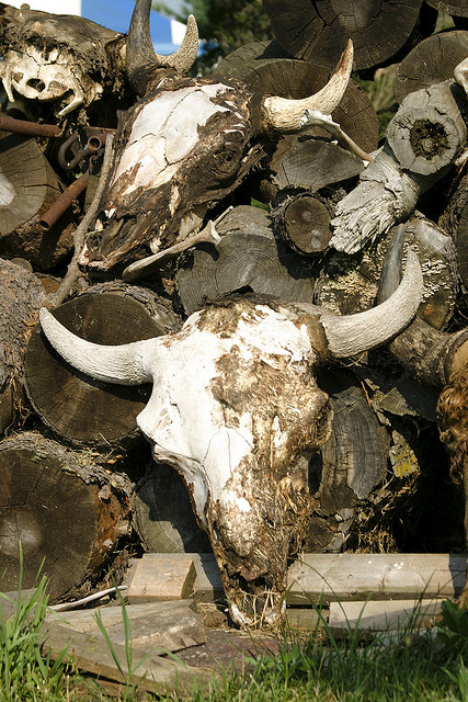 The Grisly Business Of Buffalo Bones Boing Boing