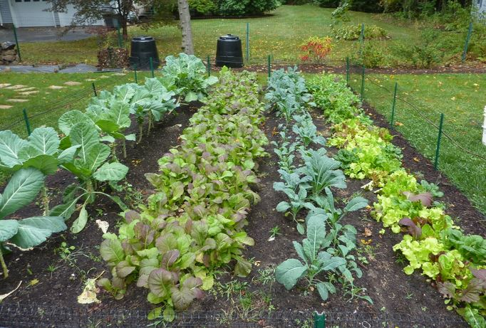 Landscaping With Vegetables Design : Farmers should make house calls boing