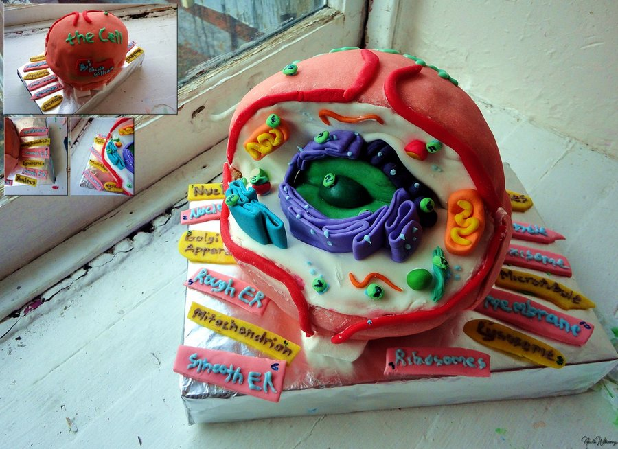 How To Make A Plant Cell Model Out Of Cake