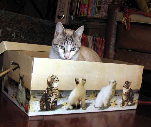 Yes, you can haz Caturday: 10 cute weekend cat photos shared by Boing Boing readers