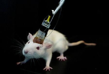 False memory planted in mouse mind by MIT researchers