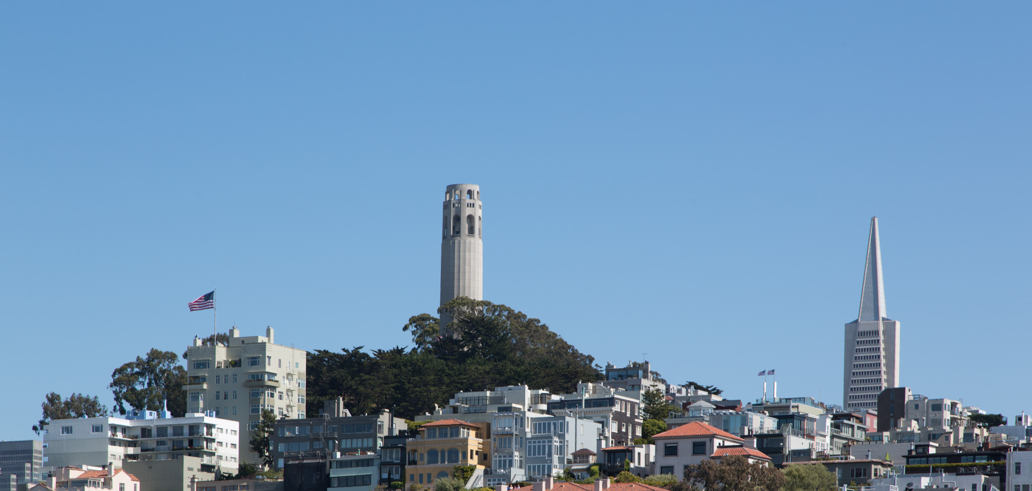 Coit Tower and the Transamerica Pyramid peek up from the San Francisco skyline.