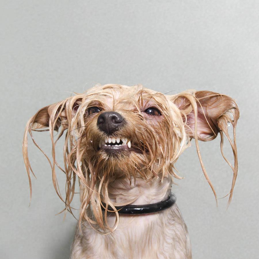 Complete Wet Dog Food For Sensitive Stomachs Uk