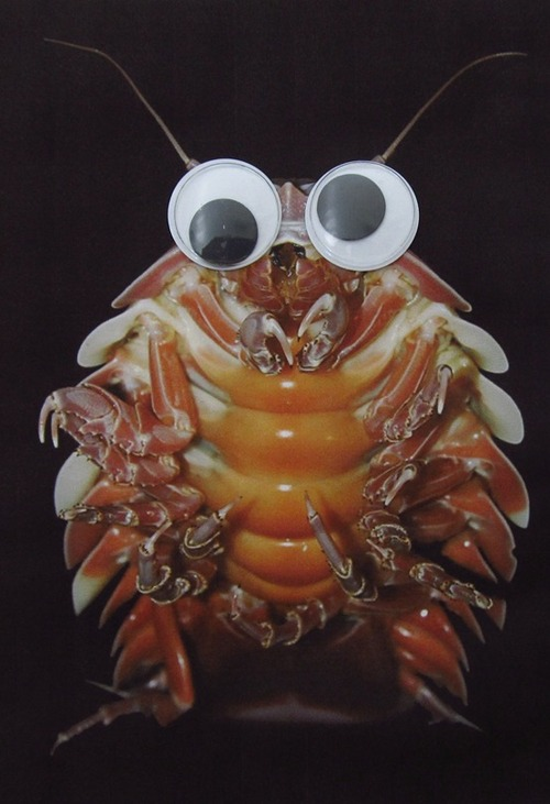 Deep sea creatures improved with the addition of googly eyes