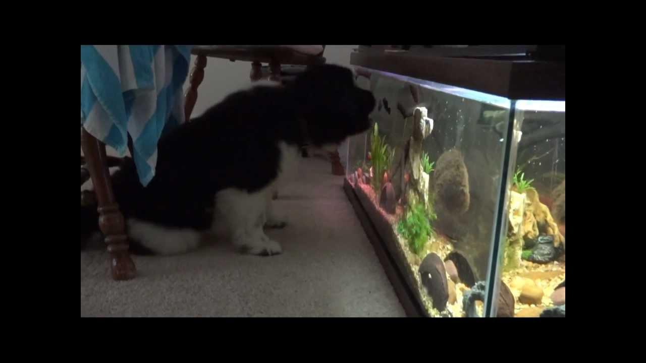 Image Result For Aquarium Encounters