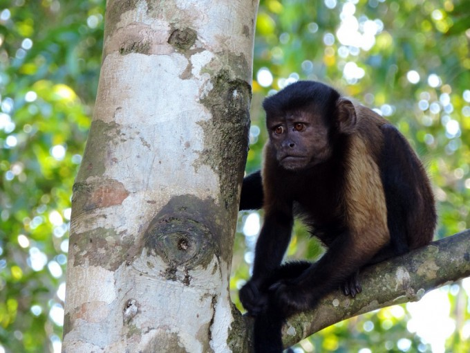 Pensive monkey, a photo shared in the Boing Boing Flickr Pool