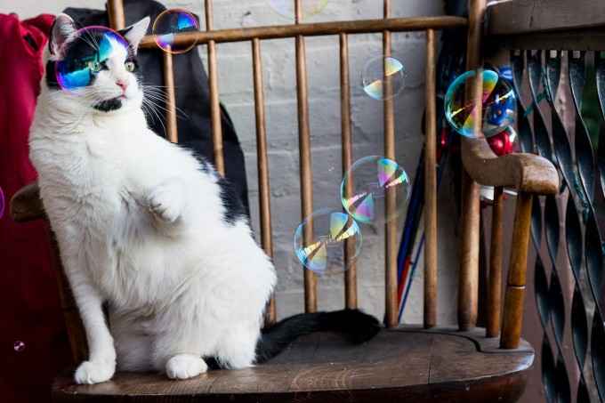 Caturday: This kitten likes to bat at bubbles with her paws