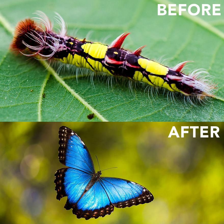 Exotic Caterpillars And The Beautiful Winged Insects They