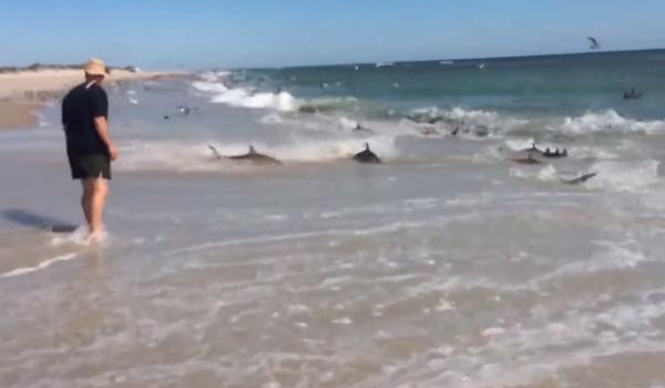 sharks-feeding