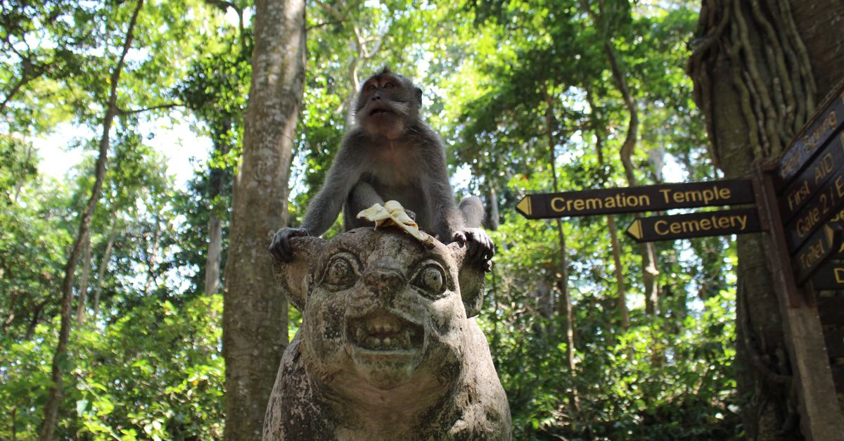 Mean Monkey in the Monkey Forest