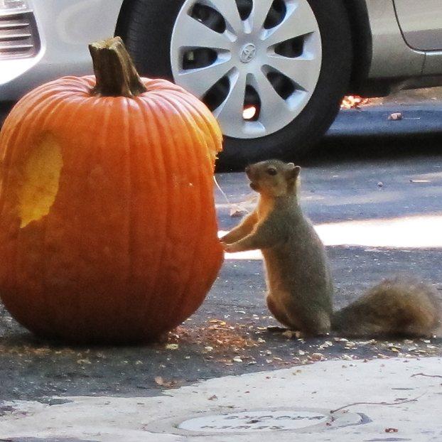 squirrel-o-lantern2