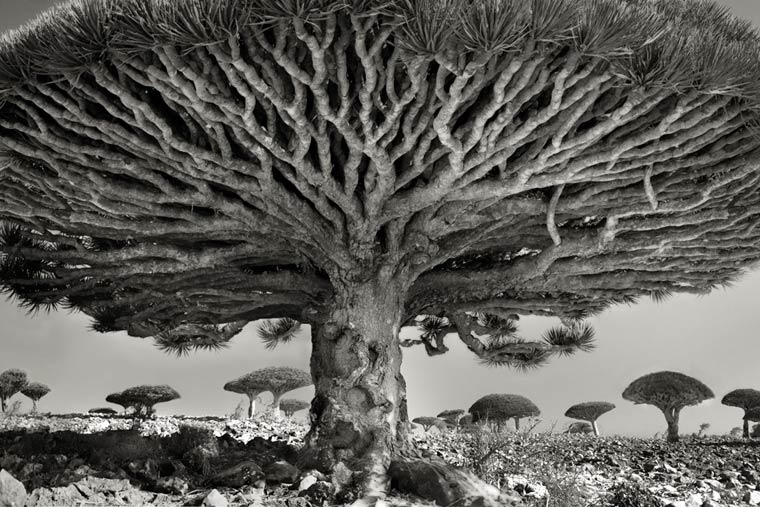 beth-moon-ancient-trees-8