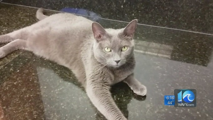 Cat survives month-long voyage from Virginia to Hawaii in shipping crate without food, water