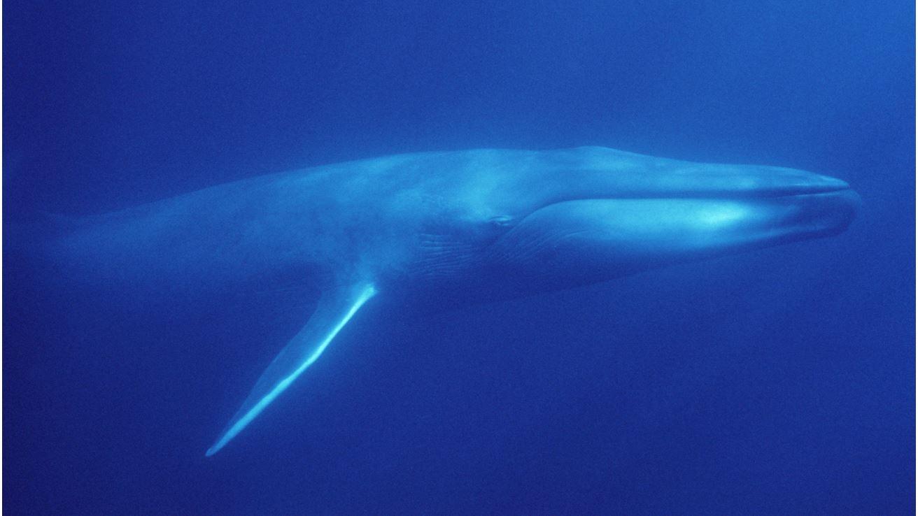 US Navy's sonar use violates Marine Mammal Protection Act ...