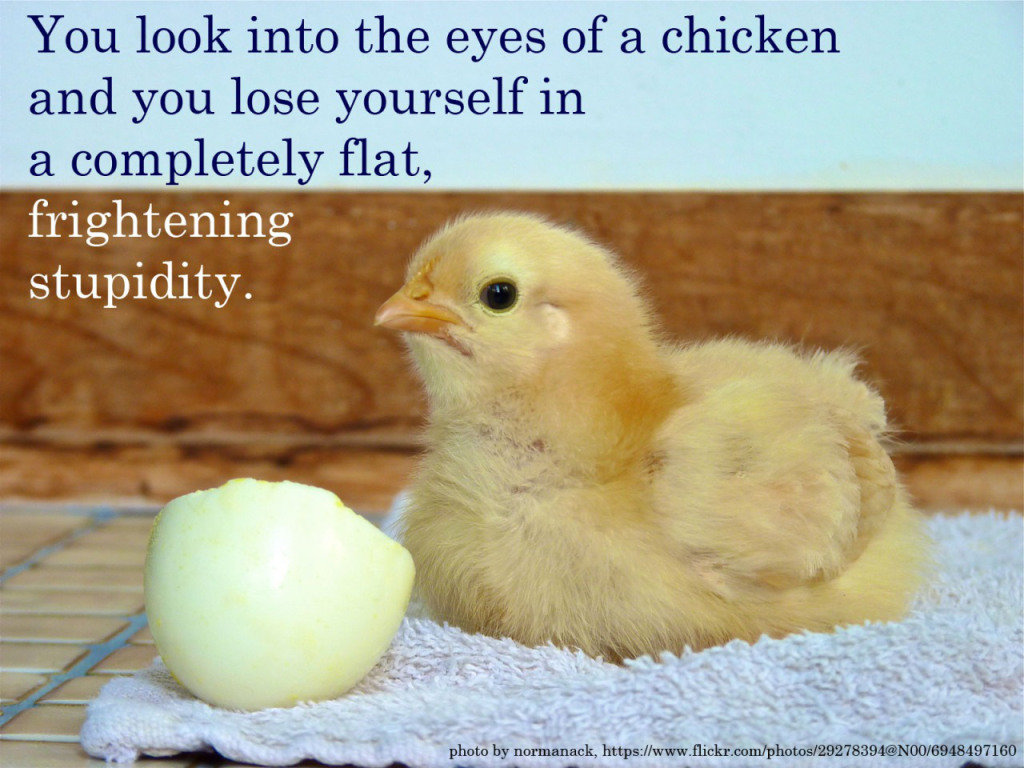 Chicken Quote: Werner Herzog's Brutally Honest Motivational Posters