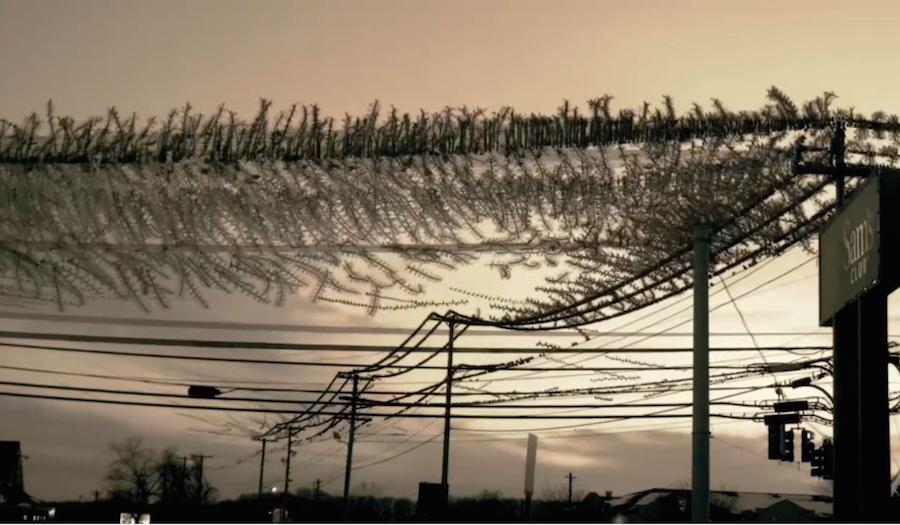 starlings02