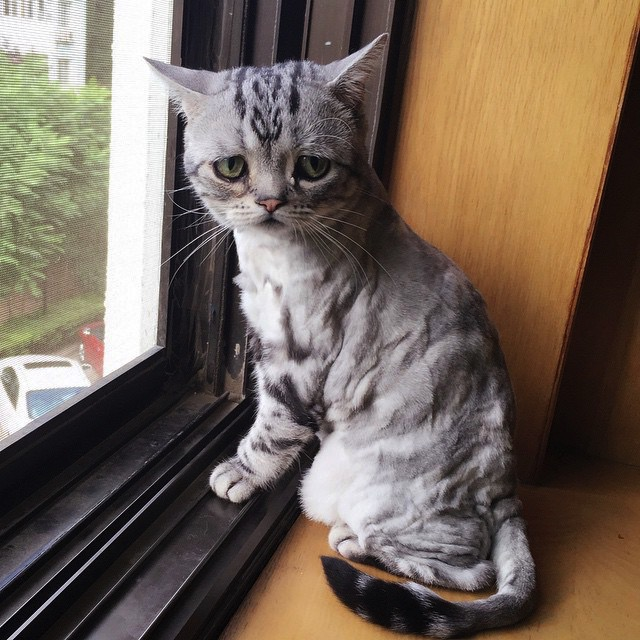 Perpetually Sad-looking Kitty Is Very, Very Cute / Boing Boing