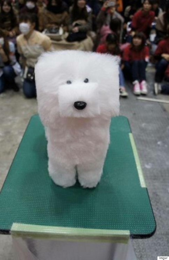 Cube Shaped Dogs Were All The Rage At The Tokyo Dog Show