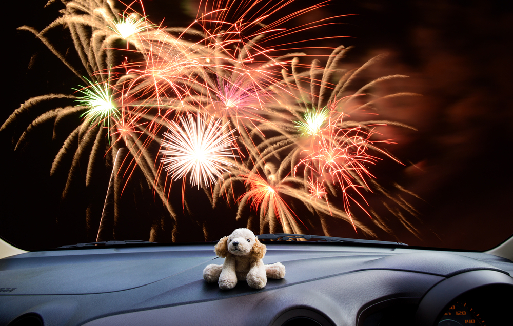 Dogs And Cats Hate Holiday Fireworks Here Are 3 Tips To