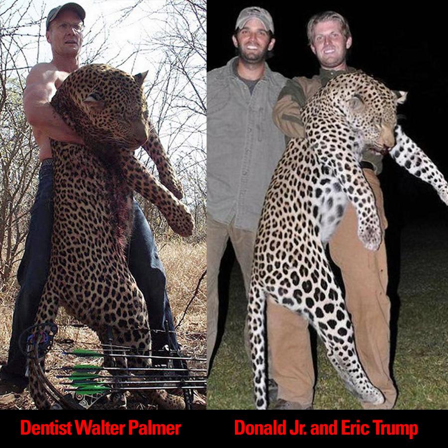 Lion-killing dentist vs. Donald Trump's sons: spot the ...