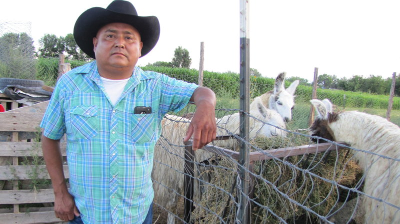 "After the Animas River spill, rancher Irving Shaggy is forced to travel a 70-mile round trip to get water for his livestock. ""It's going to be a long struggle,"" he says. Laurel Morales/KJZZ"