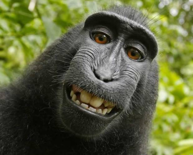 PETA sues photographer over monkey selfie copyright