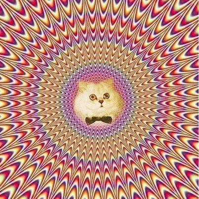 cat_hes_a_trippy_cat_pic_1756035649