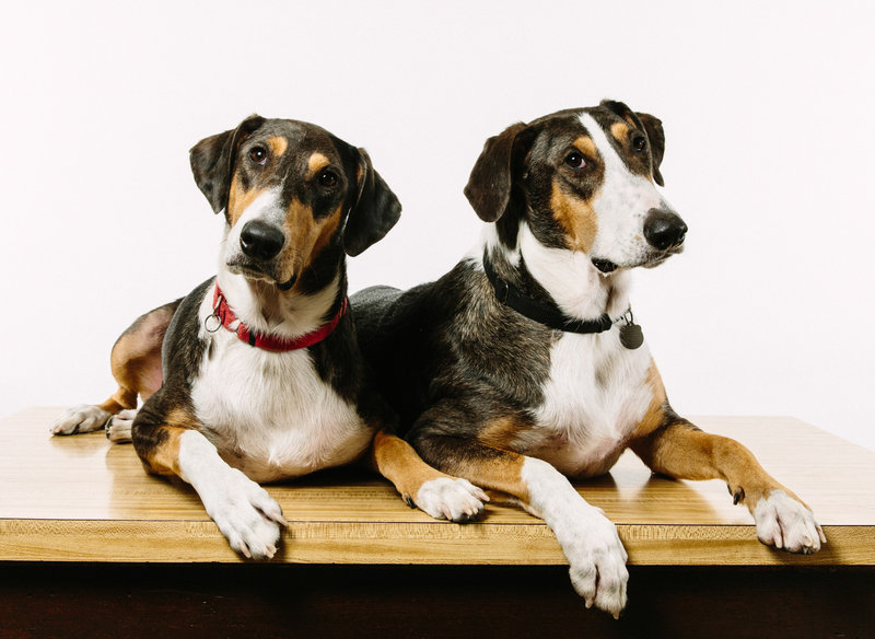 Ken (left) and Henry were created with DNA from  skin cell of another pet. [NPR]