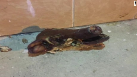 The pig's head tossed at a Philadelphia mosque today