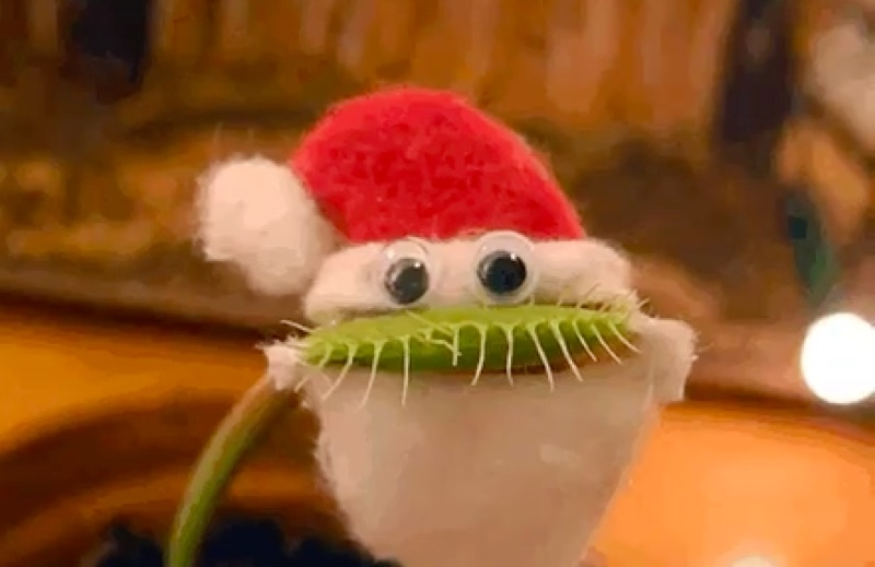 Venus fly trap plant in a googly eye santa claus costume