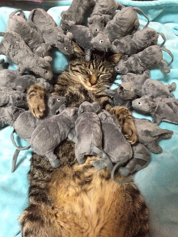 Mice-Attack
