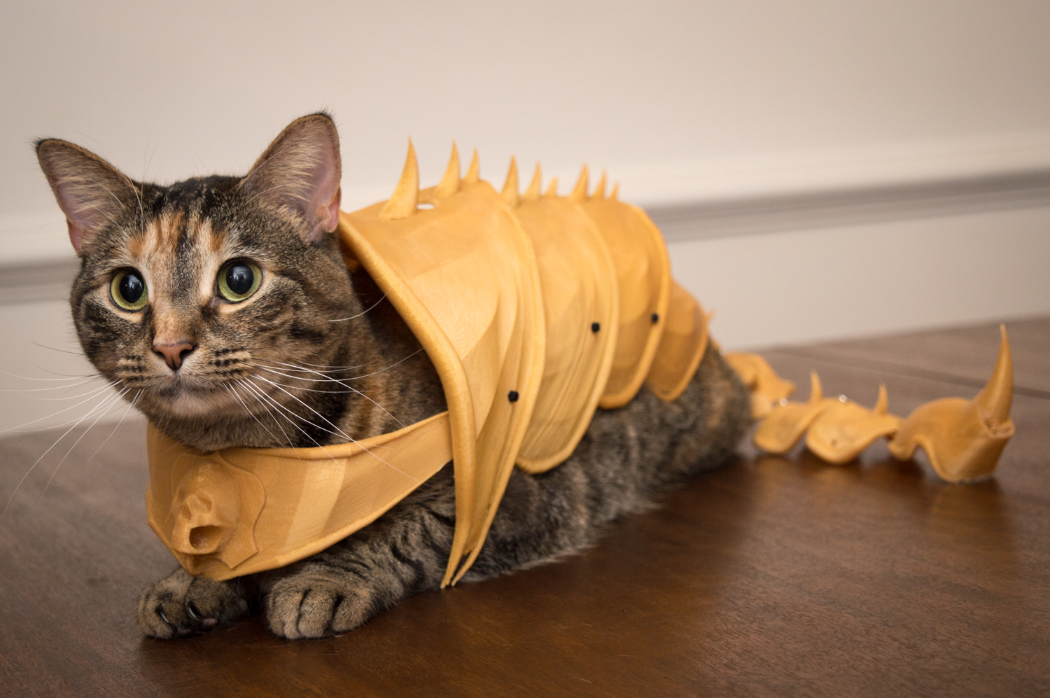 Dog Suit For Cats