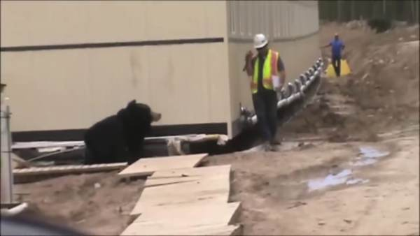 Man in bear suit gives co-worker a scare