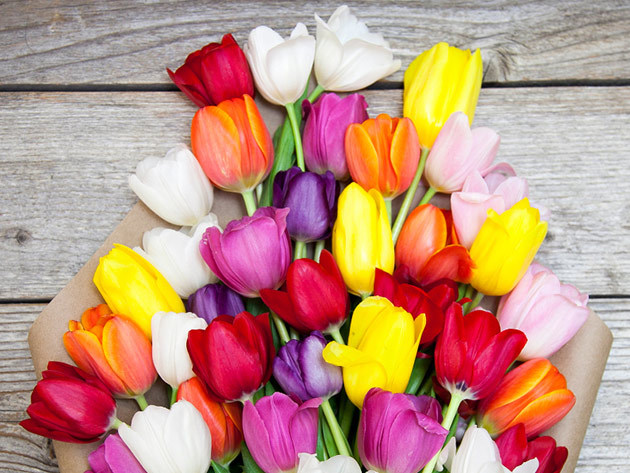 Make mothers day memorable with bouqs company spring flowers now make mothers day memorable with bouqs company spring flowers now 30 percent off boing boing mightylinksfo