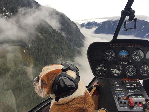 This wilderness helicopter pilot and his trusty dog co-pilot have the best life