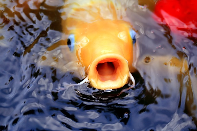 Man must remove fish pond from backyard because intruders might be injured