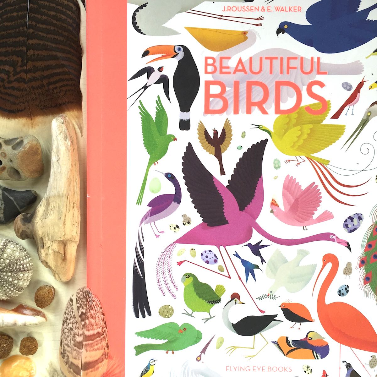 Beautiful Birds – Fly from A to Z with dozens of feathered friends
