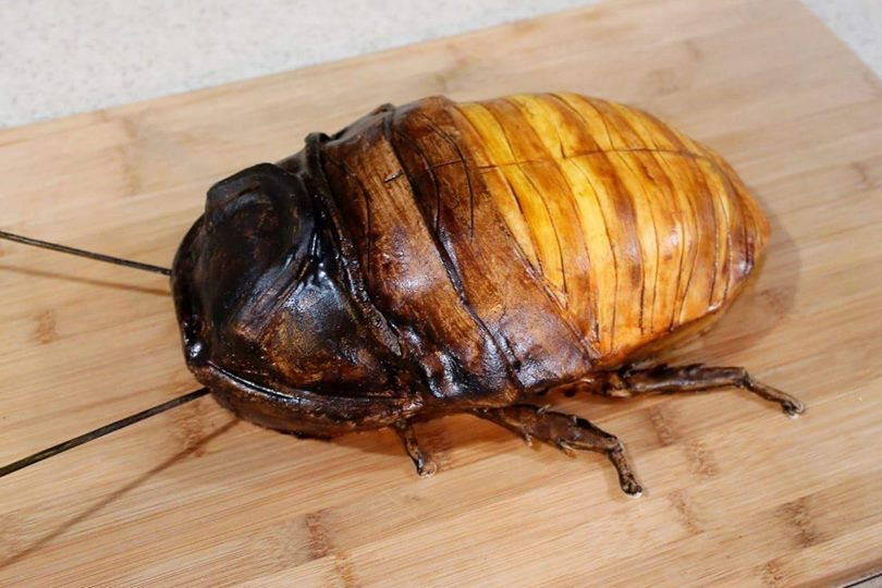 Delicious Madagascar hissing cockroach cake
