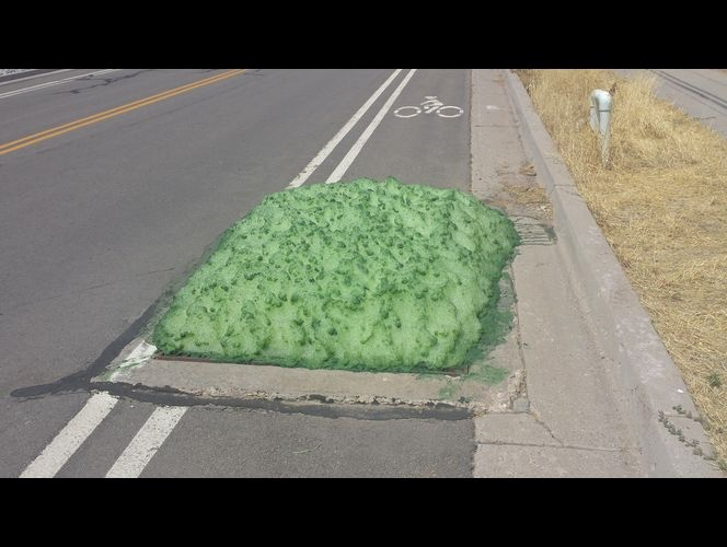Mysterious green slimy foam emerges from Utah sewer