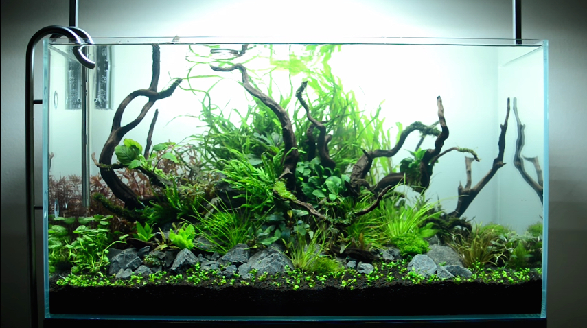 Hypnotic Timelapse Of Aquascaping A Planted Aquarium Boing Boing