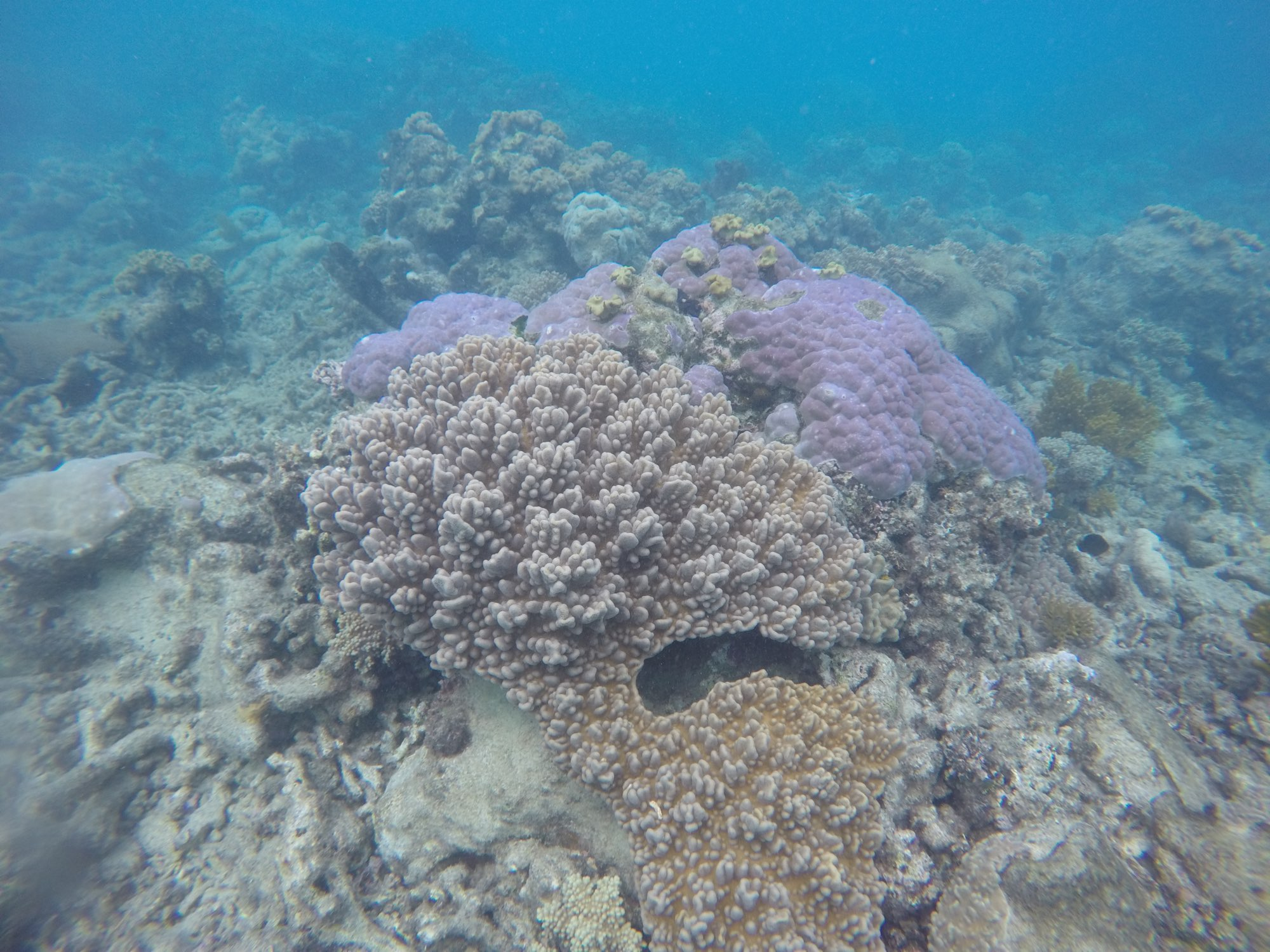 NASA Begins Study of Australia's Great Barrier Reef / Boing Boing