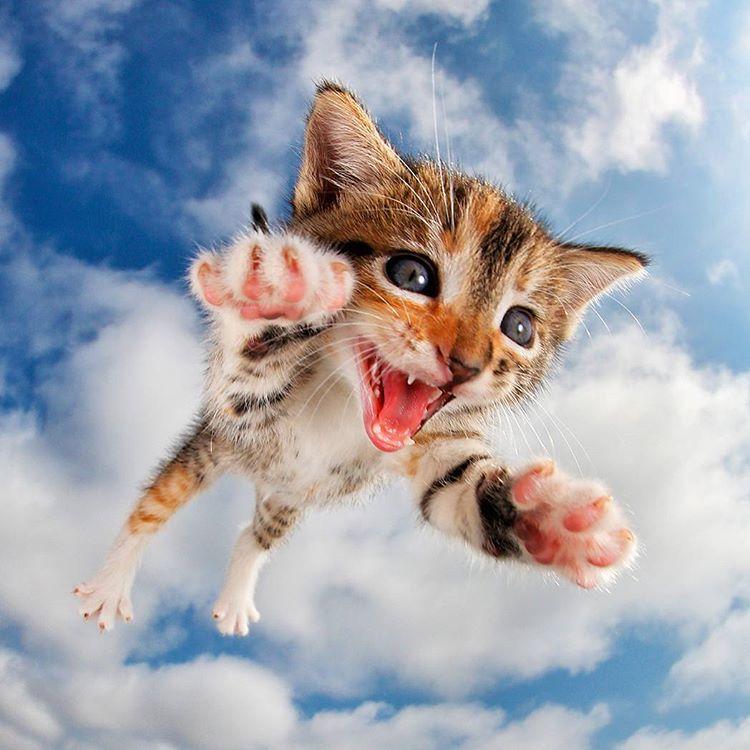 kittens / Boing Boing