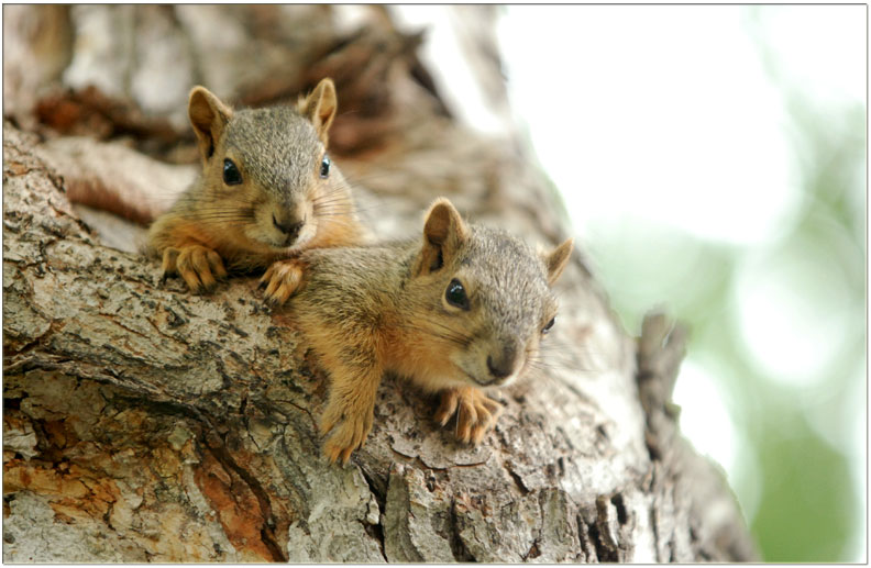 Colorado unfairly targeting wildlife refuge at swingers' sex club, says squirrel-loving swinger proprietor