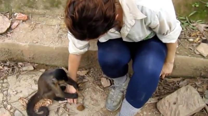 Monkey tries to teach human how to open a nut