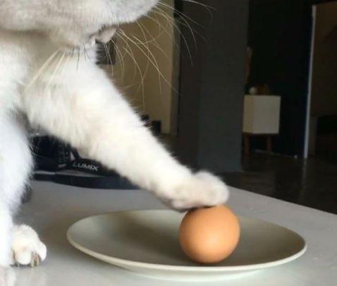 Can A Cat Eat An Egg
