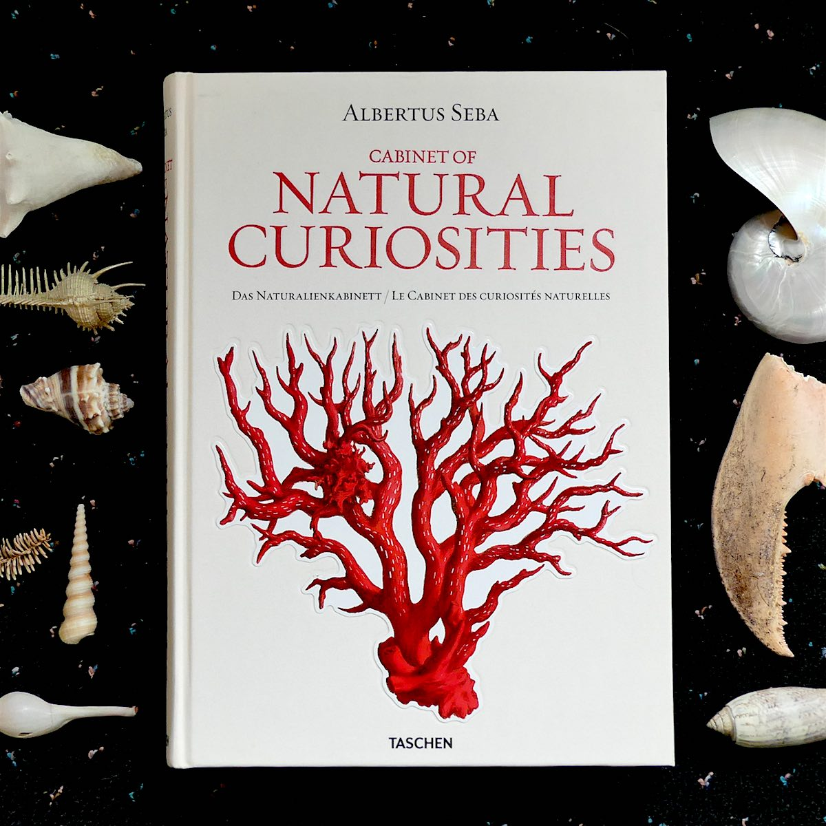 Cabinet Of Natural Curiosities U2013 A Treasure Trove Of Exquisite Botanical  Images, Copyright Free